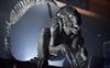 Xenomorph20991's avatar