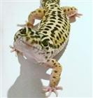 kiragecko's avatar
