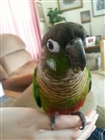 birdfeets's avatar
