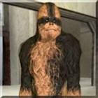Paulie2499's avatar