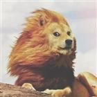 Li0n_Gurl05's avatar