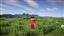 FireLauncher's avatar