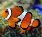 clownfish888's avatar