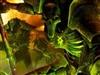 Necronus's avatar
