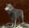 GreyLion's avatar
