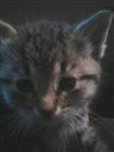 Blackout608's avatar