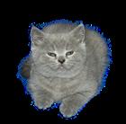 Awesomeristic's avatar