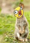 Cat_Origins's avatar