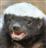 Derpcakes's avatar