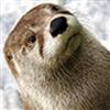 GoOtterGo's avatar