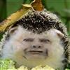 Mr_Morph's avatar
