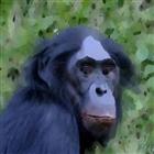 Herimbothemonkey's avatar