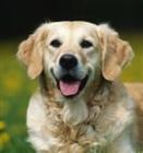 Dogboy467's avatar