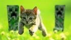 Kiytt's avatar