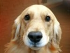 sammamow's avatar
