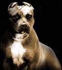 PITBULL4578's avatar