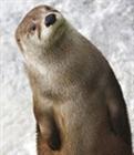 an_otter's avatar