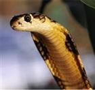 Snake_Mittens's avatar