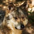 sarahwolf449's avatar