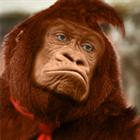 Donkey_Kong's avatar