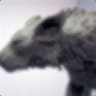 grimhound's avatar