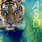 ASDY333's avatar