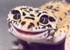 strongecko15's avatar
