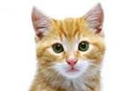 Muffinberry's avatar