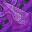 glazed_terracotta_purple