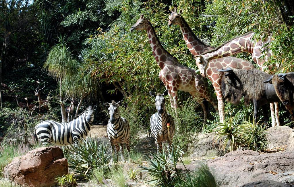 Jungle Cruise Real Jungle Animals