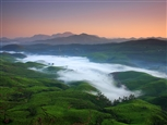 morning_mist_covers_the_valley_of_tea_fields_and_shola_forests__munnar__india