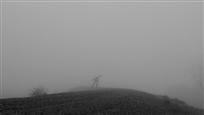 zombie-fog