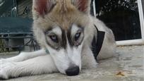 Doggystyle Domestic Dog Breeds