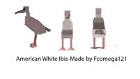 american white ibis dossier