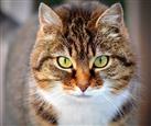 cat-300572_960_720