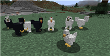 cold_chickens