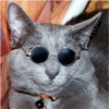A_Chill_Cat's avatar