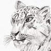 View SkyLeopard's Profile