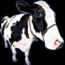 MooingCow's avatar