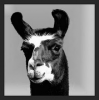 Blackllama79's avatar