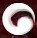 View mythcaptor's Profile