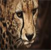 lfroms's avatar