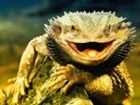 Moochie's avatar