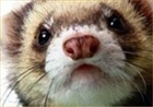 Ferrett42's avatar