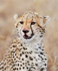 RawrTara's avatar