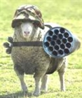 View Sheepslayer64's Profile