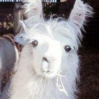 ravagefox's avatar