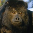 View howlingmonkey's Profile