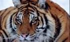 View Rabidtiger's Profile