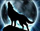 MidnightWolf6's avatar